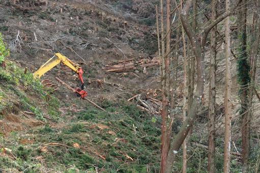 벌목 작업