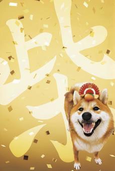 New Year's card Shiba Inu