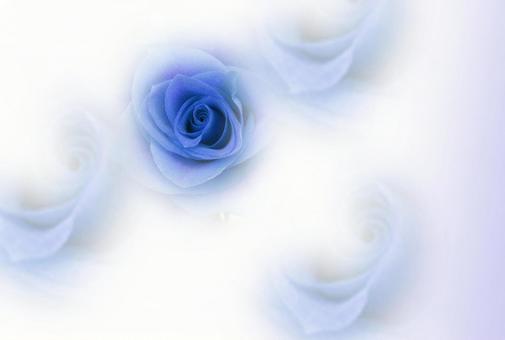꽃의 여왕 장미 엽서 블루