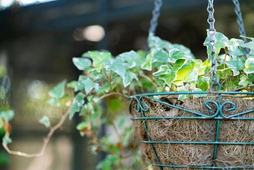 Fashionable flowerpot gardening