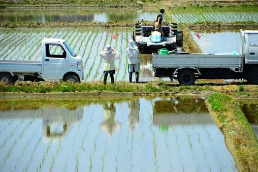 농업 모내기 풍경