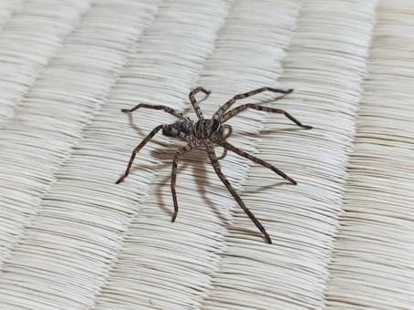 A spider crawling on a tatami mat