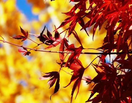 Autumn leaves ③