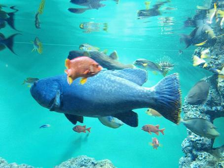 수족관에 찾아 푸른 큰 물고기!