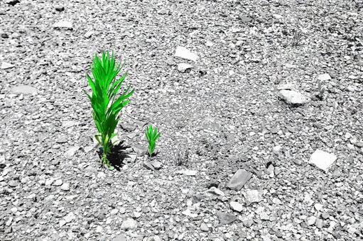 Summer grass of dry ground # 17