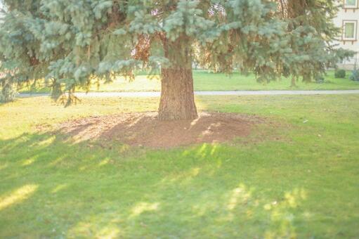 Under a big tree