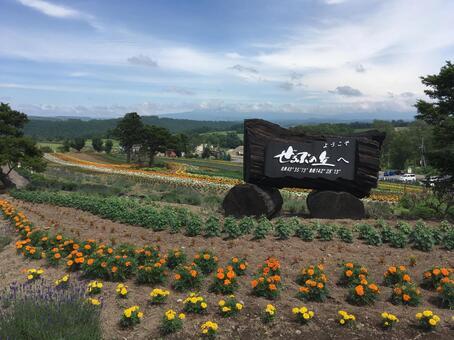 홋카이도 비 에이의 꽃밭 (ぜるぶ의 언덕)