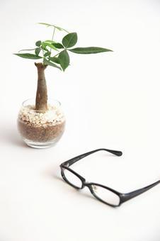 Pakira and glasses