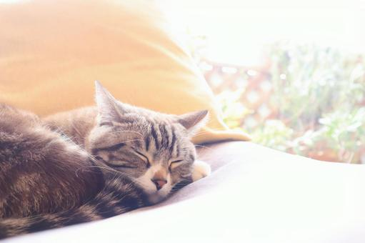 A cute tabby cat taking a nap in a glittering gentle day