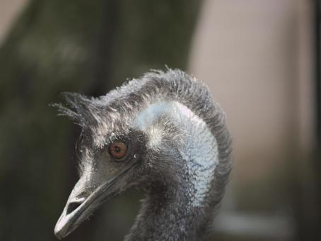 Emu's profile
