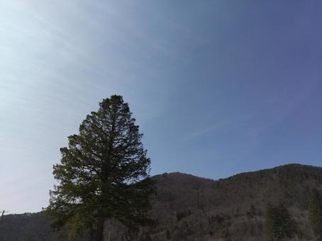 침엽수와 푸른 하늘의 환상적인 사진
