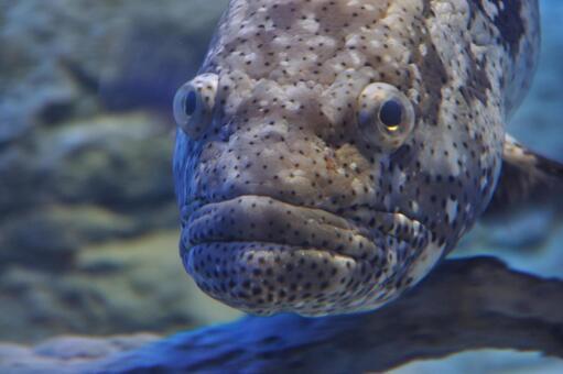 거친 얼굴의 물고기 씨