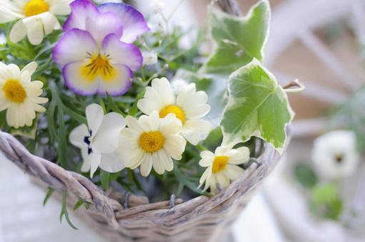 Picking flowers in the garden