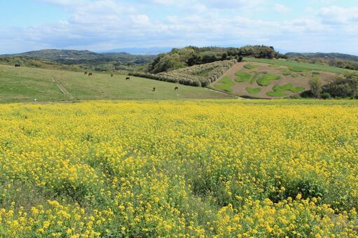 Flower field 8