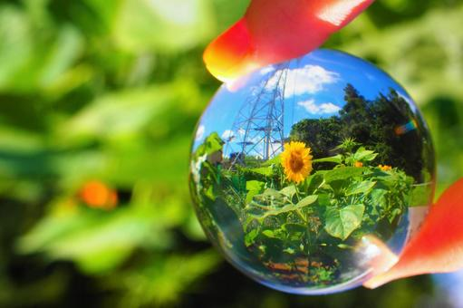 Sunflower field and steel tower in the glass ball