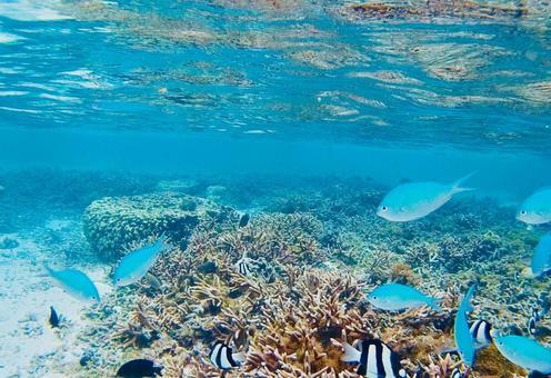 산호초의 물고기