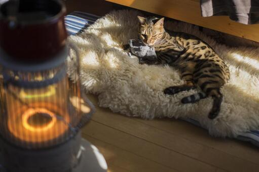 Oil stove and bengal cat