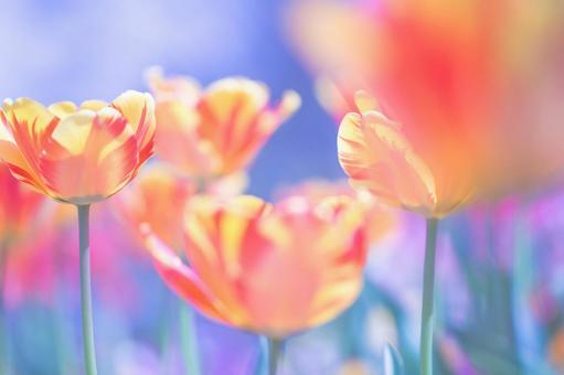 Fantastic flowers 135
