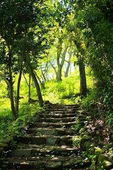 Fresh green of Miura Alps