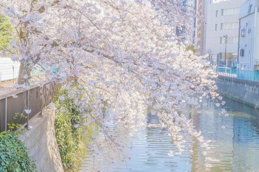 벚꽃과 푸른 하늘과 거리 풍경과 강