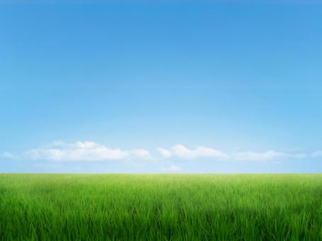 Rice field and blue sky 2