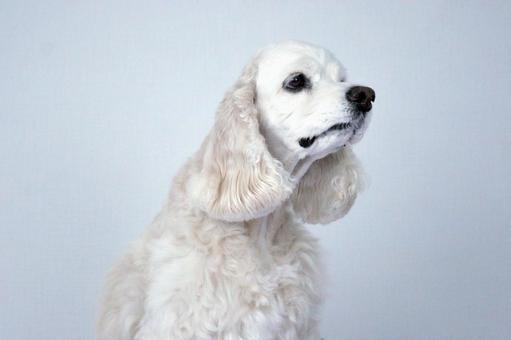 A dog that faces sideways