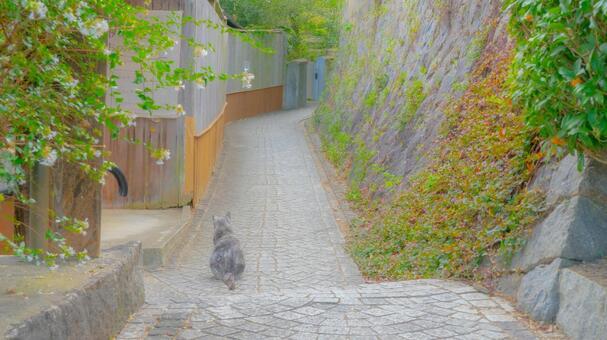 Onomichi cat
