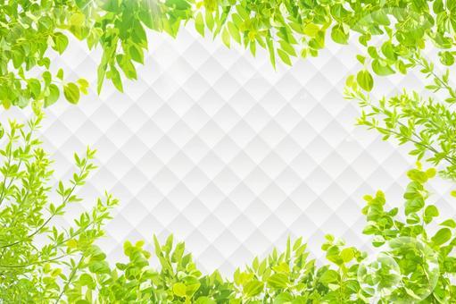 Background texture Fresh green Komorebi Diamond pattern frame Glitter
