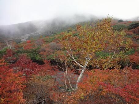 Autumn leaves Asahidake Nasutake Fog Autumn leaves hunting