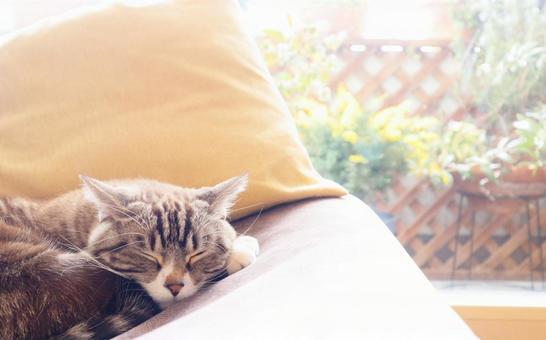 Relaxing cute tabby cat sleeping comfortably