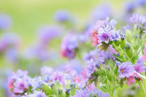 뿌루모나리아 자연 프레임 꽃 프레임
