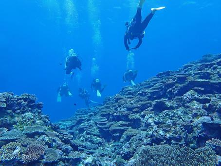 Coral reefs of divers and the sea of Okinawa