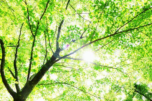 Fresh green sunbeams glitter