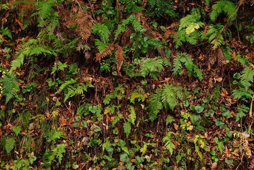 一邊蕨類植物