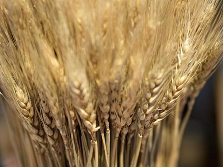A bunch of wheat
