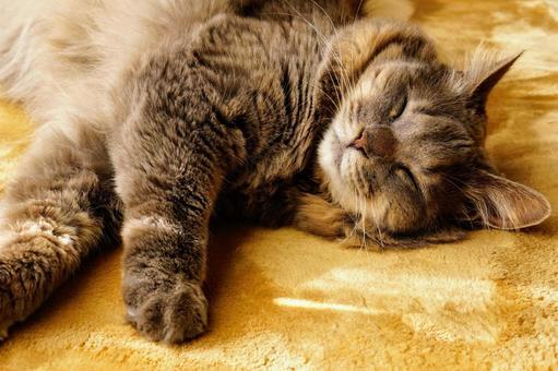昼寝をする長毛種の猫