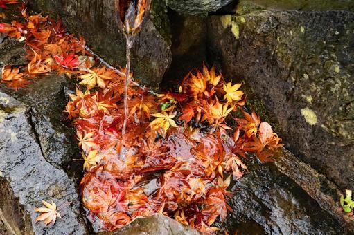 秋の風景 紅葉