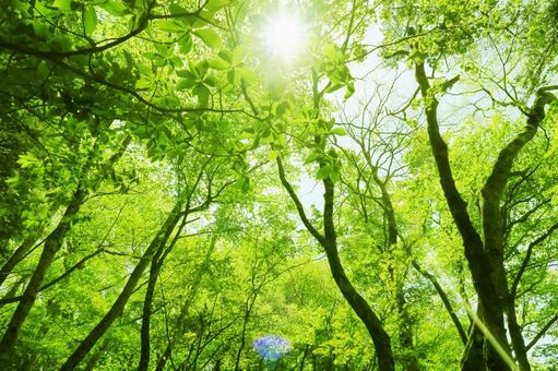 Forest background of fresh green image with sunlight through the trees