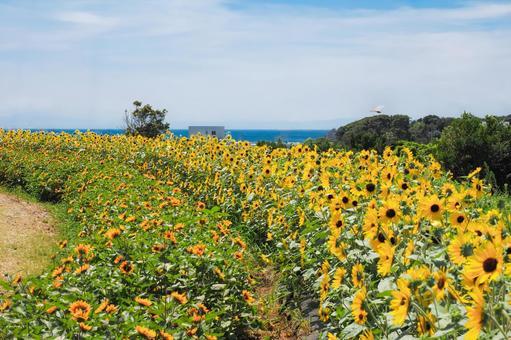 夏だ、青い空とひまわりの花