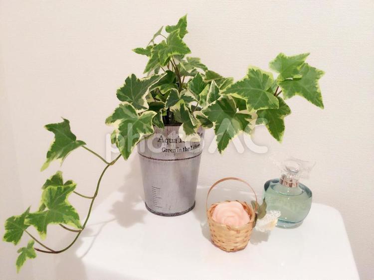 観葉植物(アイビー・ヘデラ)で風水の写真