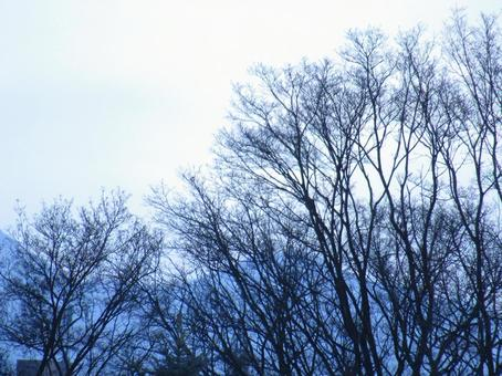 Trees Trees Trees Branches Natural Winter