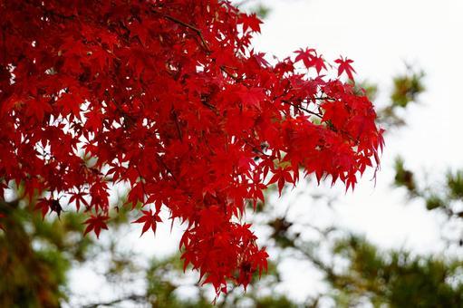 가을 풍경 단풍 단풍