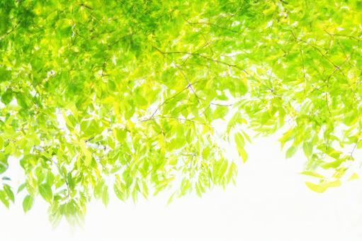 Beautiful fresh green background material