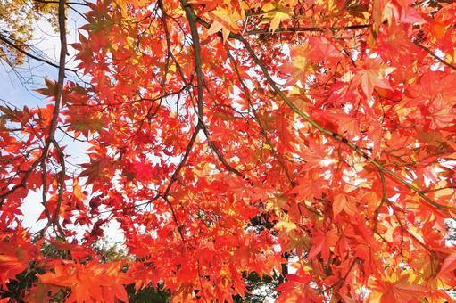 Autumn leaves 25