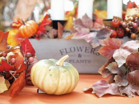 Pumpkin / Halloween