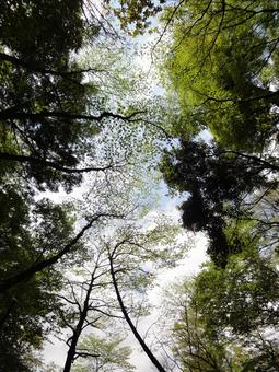 Forest looking up