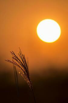 Sunset thin
