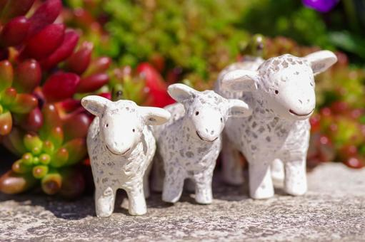 Ovis aries lined up