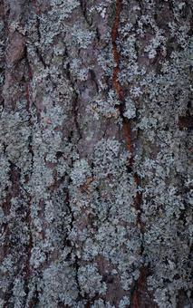 Tasteful forest tree bark