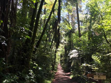 Jungle road with thick trees